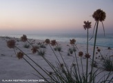 flowers at sunset on the beach