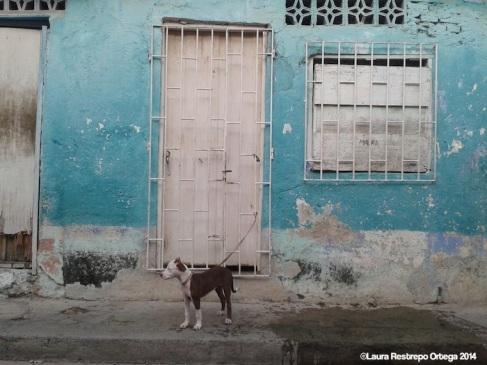 perro casa st marta small