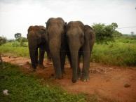 3 elephants2