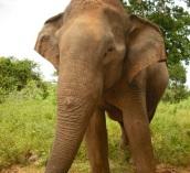 elephant5