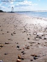 australia hervey bay beach 1