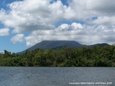 australia queensland daintree rainforest