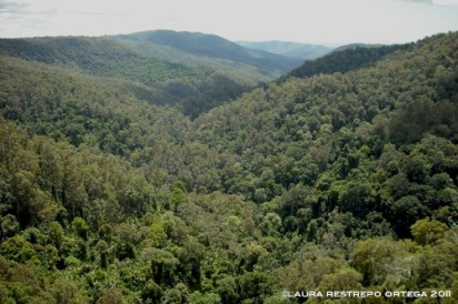 australia queensland springbrook