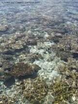 maldives noonu atoll coral