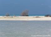 maldives raa atoll beach 1