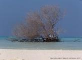 maldives raa atoll beach 2