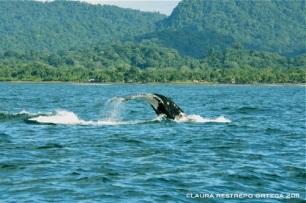 cola de ballena 3