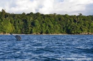 cola de ballena 4