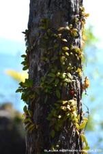 hojas sobre tronco