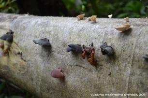 hongos en tronco