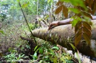mano en tronco