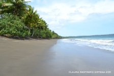 playa de tribugá