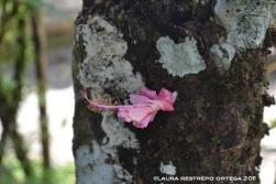san joaquín crece en el tronco de un árbol