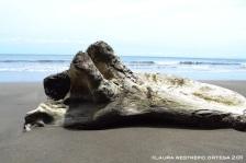 tronco en la playa