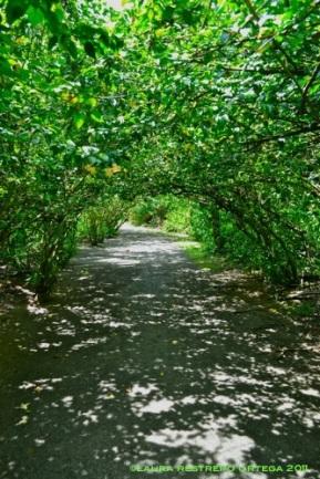 túnel de san joaquín