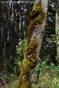 árbol con musgo