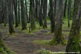 bosque verde 2