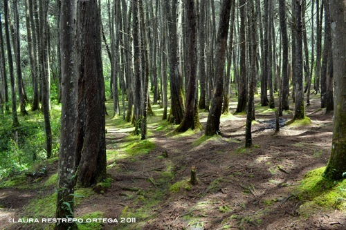 bosque verde 3