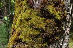 musgo en el árbol