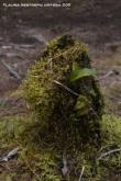 tronco con musgo