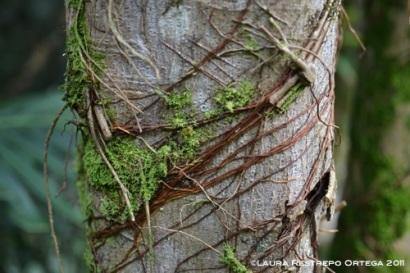 árbol y raíces