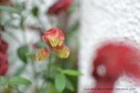 flor roja 1