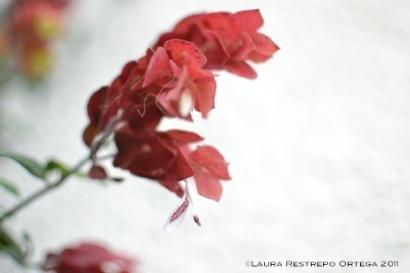 flor roja 2