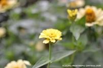 flores amarillas 2