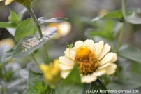 grillo sobre flor amarila
