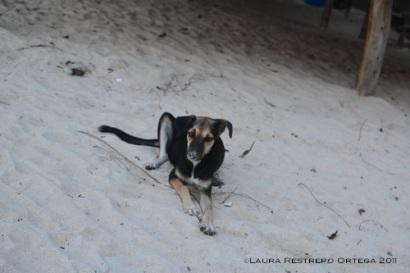 perro en Playa Blanca 1
