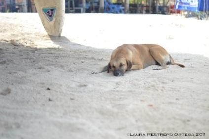 perro en Playa Blanca 2