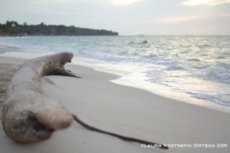 tronco en Playa Blanca, Barú