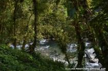 el río através de los árboles