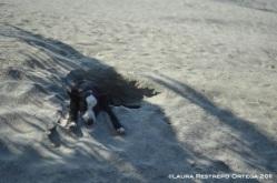 perro en la arena