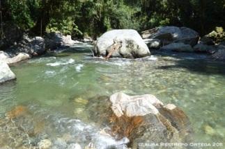 río 5