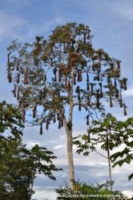 árbol de mochileros