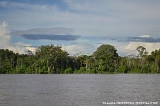 árboles a la orilla del río