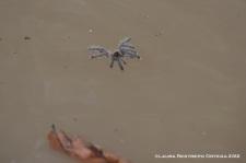 araña en el agua