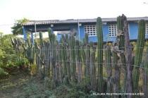 cerca de cactus