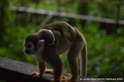 isla de los micos 10