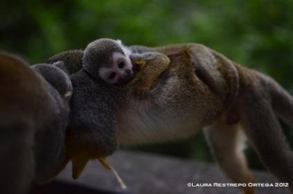 isla de los micos 11