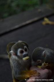 isla de los micos 12