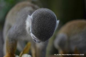 isla de los micos 4