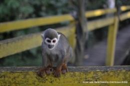 isla de los micos 7