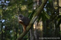 isla de los micos 8