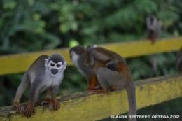 micos 2