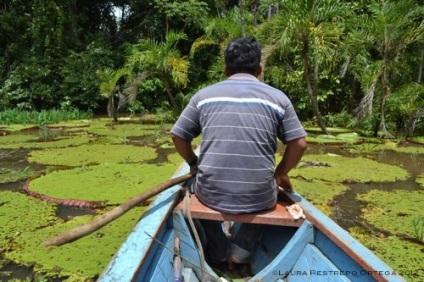 navegando entre lotos
