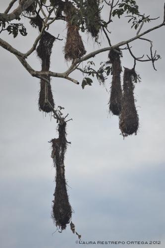 nidos de mochileros