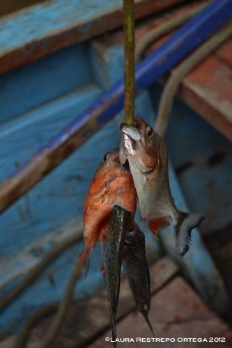 palo con pirañas