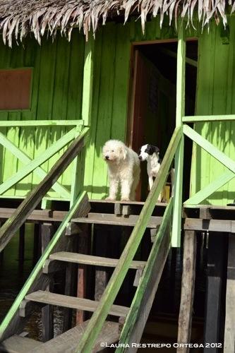 perros de Sacambú